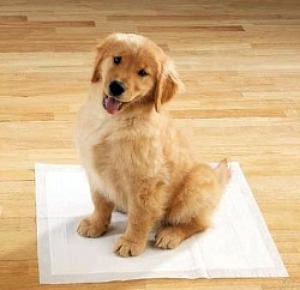 Puppy potty training do's and don'ts