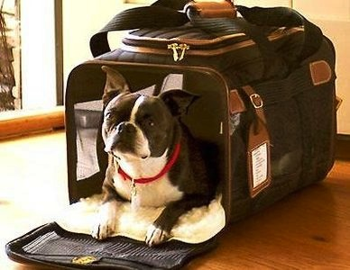 Domestic and international travel with pets what for Air canada pet in cabin
