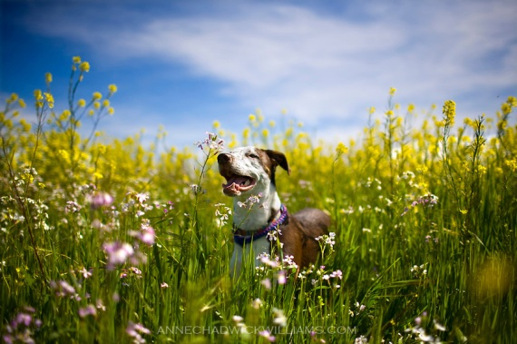 Ollie in field with yellow flowers on Wednesday, March 30, 2011.